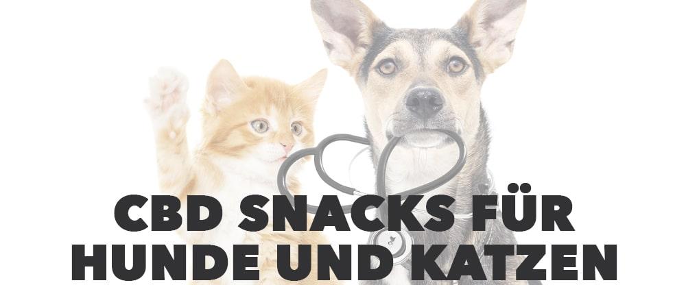 cbd snack kekse hund katze
