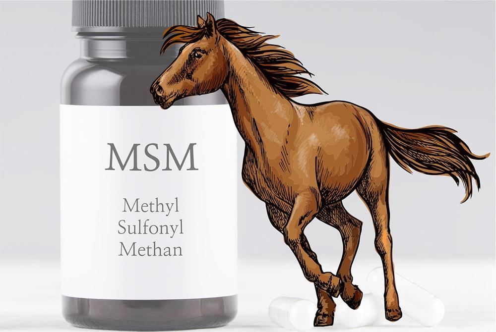 msm pferde