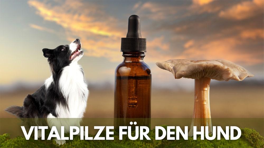 vitalpilze hund
